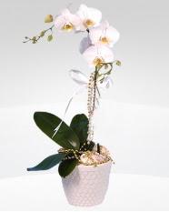 1 dallı orkide saksı çiçeği  Nevşehir 14 şubat sevgililer günü çiçek