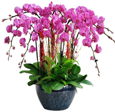 9 dallı mor orkide  Nevşehir çiçek siparişi sitesi