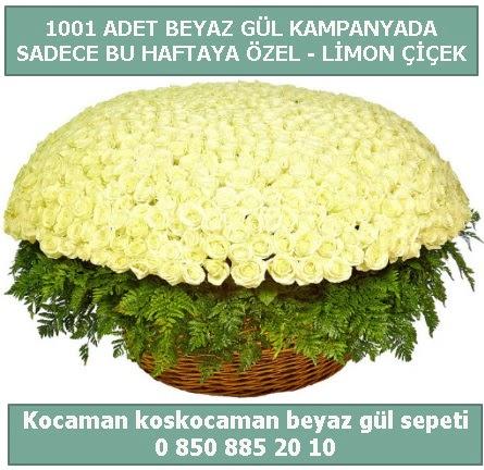 1001 adet beyaz gül sepeti özel kampanyada  Nevşehir çiçek online çiçek siparişi