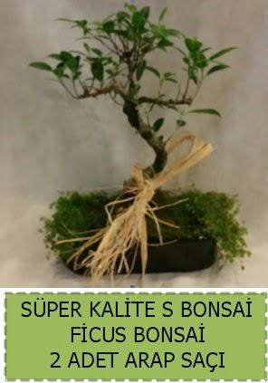Ficus S Bonsai ve arap saçı  Nevşehir kaliteli taze ve ucuz çiçekler