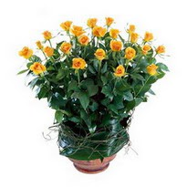 Nevşehir hediye çiçek yolla  10 adet sari gül tanzim cam yada mika vazoda çiçek