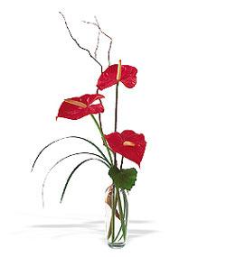 Nevşehir çiçek gönderme sitemiz güvenlidir  cam yada mika Vazoda 3 adet  antoryum