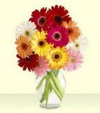 Nevşehir anneler günü çiçek yolla  cam yada mika vazoda 15 özel gerbera