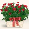 Nevşehir hediye sevgilime hediye çiçek  11 adet kirmizi gül sepette