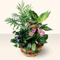 Nevşehir güvenli kaliteli hızlı çiçek  5 adet canli çiçek sepette