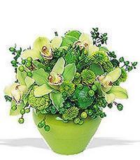 cam yada mika vazoda 5 adet orkide   Nevşehir 14 şubat sevgililer günü çiçek