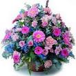 karisik mevsim kir çiçekleri  Nevşehir çiçek online çiçek siparişi