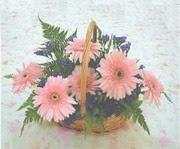 gerbera çiçeklerinde sepet   Nevşehir çiçek servisi , çiçekçi adresleri