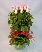 13 adet pembe gül silindirde   Nevşehir çiçek servisi , çiçekçi adresleri