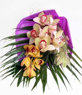 Nevşehir hediye çiçek yolla  1 adet dal orkide buket halinde sunulmakta