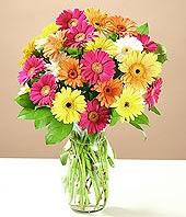 Nevşehir internetten çiçek siparişi  17 adet karisik gerbera
