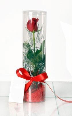 Nevşehir çiçek servisi , çiçekçi adresleri  Silindir vazoda tek kirmizi gül