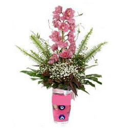 Nevşehir çiçek yolla , çiçek gönder , çiçekçi   cam yada mika vazo içerisinde tek dal orkide çiçegi
