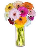 Nevşehir çiçekçi telefonları  Farkli renklerde 15 adet gerbera çiçegi