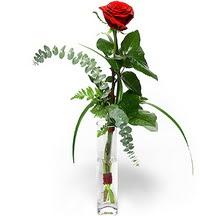 Nevşehir çiçek siparişi sitesi  Sana deger veriyorum bir adet gül cam yada mika vazoda