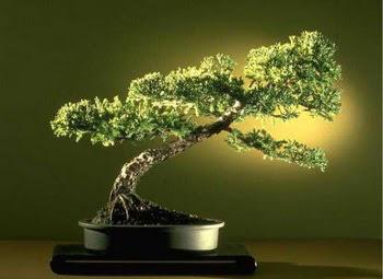 ithal bonsai saksi çiçegi  Nevşehir İnternetten çiçek siparişi