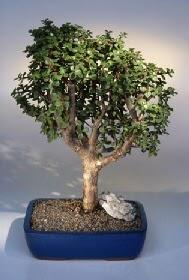 Nevşehir çiçek mağazası , çiçekçi adresleri  ithal bonsai saksi çiçegi  Nevşehir çiçek gönderme