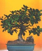 Nevşehir kaliteli taze ve ucuz çiçekler  ithal bonsai saksi çiçegi  Nevşehir çiçekçi telefonları