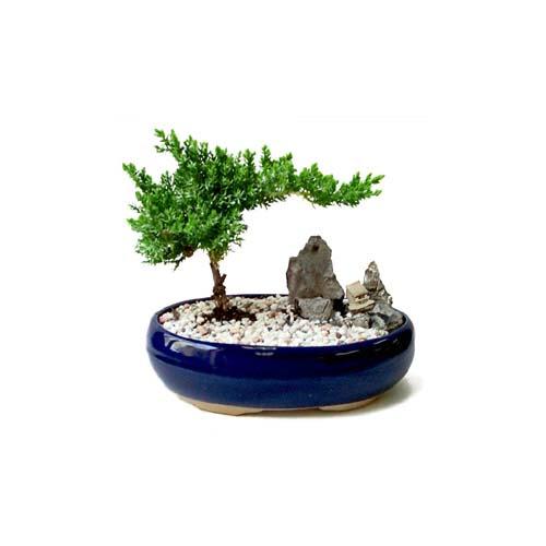 ithal bonsai saksi çiçegi  Nevşehir çiçek mağazası , çiçekçi adresleri