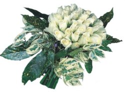 Nevşehir çiçekçi telefonları  9 Beyaz gül Özel kisiler için