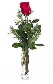 Vazo içerisinde 1 adet kirmizi gül  Nevşehir hediye çiçek yolla