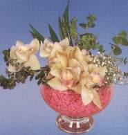 Nevşehir online çiçek gönderme sipariş  Dal orkide kalite bir hediye