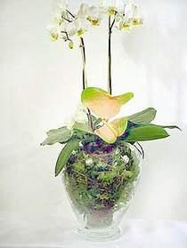 Nevşehir güvenli kaliteli hızlı çiçek  Cam yada mika vazoda özel orkideler