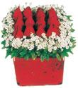 Nevşehir çiçek mağazası , çiçekçi adresleri  Kare cam yada mika içinde kirmizi güller - anneler günü seçimi özel çiçek