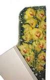 Nevşehir çiçek mağazası , çiçekçi adresleri  Kutu içerisine dal cymbidium orkide
