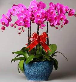 7 dallı mor orkide  Nevşehir internetten çiçek siparişi