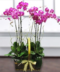 4 dallı mor orkide  Nevşehir cicekciler , cicek siparisi
