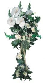 Nevşehir online çiçek gönderme sipariş  antoryumlarin büyüsü özel