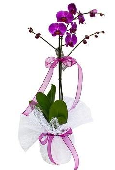 Tek dallı mor orkide  Nevşehir kaliteli taze ve ucuz çiçekler