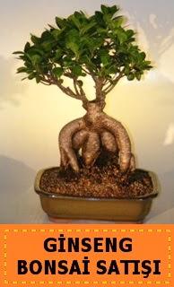 Ginseng bonsai satışı japon ağacı  Nevşehir ucuz çiçek gönder