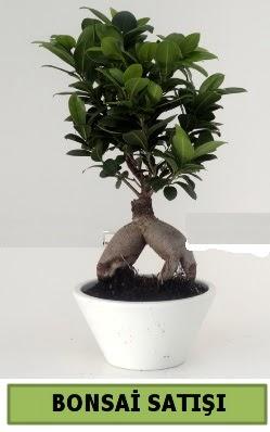 Bonsai japon ağacı satışı  Nevşehir çiçek siparişi vermek