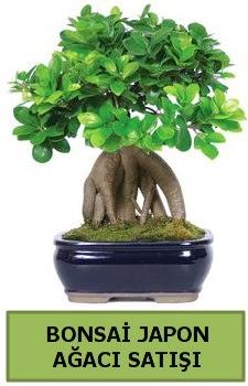 Bonsai japon ağacı satışı  Nevşehir güvenli kaliteli hızlı çiçek