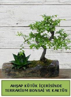 Ahşap kütük bonsai kaktüs teraryum  Nevşehir çiçekçi telefonları