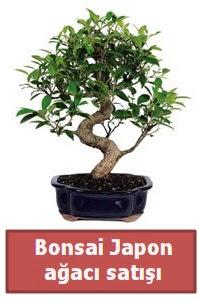 Japon ağacı bonsai satışı  Nevşehir çiçek gönderme sitemiz güvenlidir