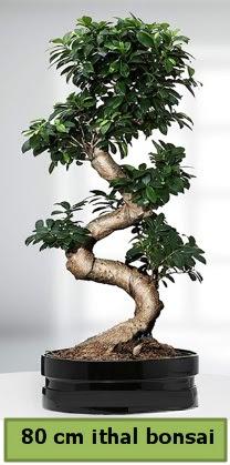 80 cm özel saksıda bonsai bitkisi  Nevşehir kaliteli taze ve ucuz çiçekler