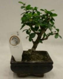 Küçük minyatür bonsai japon ağacı  Nevşehir çiçek mağazası , çiçekçi adresleri