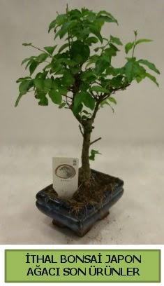 İthal bonsai japon ağacı bitkisi  Nevşehir çiçekçiler