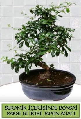 Seramik vazoda bonsai japon ağacı bitkisi  Nevşehir çiçek gönderme sitemiz güvenlidir