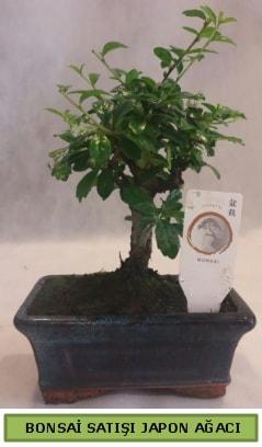 Minyatür bonsai ağacı satışı  Nevşehir çiçek mağazası , çiçekçi adresleri