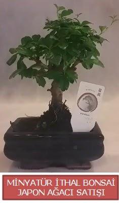 Küçük görsel bonsai japon ağacı bitkisi  Nevşehir yurtiçi ve yurtdışı çiçek siparişi