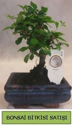 Bonsai ithal görsel minyatür japon ağacı  Nevşehir online çiçekçi , çiçek siparişi