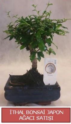 İthal küçük boy minyatür bonsai ağaç bitkisi  Nevşehir kaliteli taze ve ucuz çiçekler