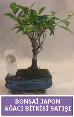 İthal Bonsai japon ağacı bitkisi satışı  Nevşehir hediye sevgilime hediye çiçek