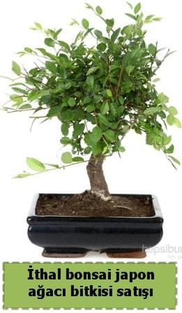 İthal bonsai saksı çiçeği Japon ağacı satışı  Nevşehir hediye sevgilime hediye çiçek