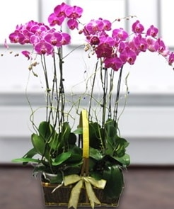 7 dallı mor lila orkide  Nevşehir çiçek online çiçek siparişi