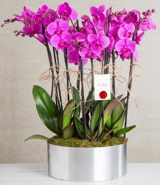 11 dallı mor orkide metal vazoda  Nevşehir çiçek online çiçek siparişi